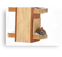 Anyplace is home when its cold - Red Squirrel Metal Print