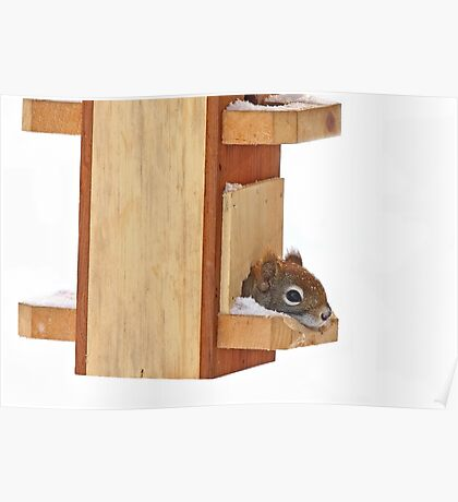 Anyplace is home when it's cold - Red Squirrel Poster