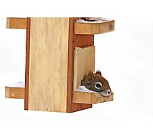 Anyplace is home when its cold - Red Squirrel Photographic Print