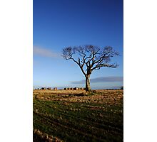 Rihanna Tree And Bales Photographic Print