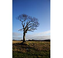Rihanna Tree, Alive! Photographic Print
