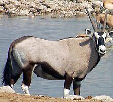 Oryx by tj107