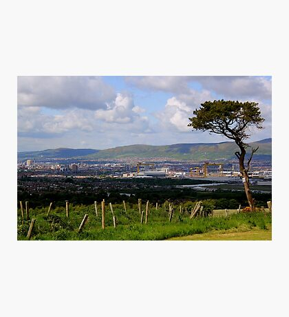 Another Tree With A View Photographic Print