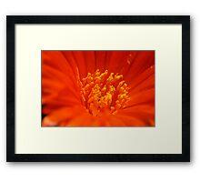 Flaming Nectar Framed Print