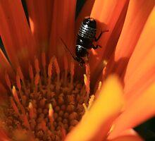 Flower Bug by saharabelle