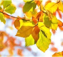 Autumn Leaves ~ Impressions by Susie Peek