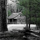 Carter Shields Cabin VIII by Gary L   Suddath