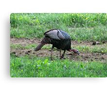 Eastern Wild Turkey Canvas Print
