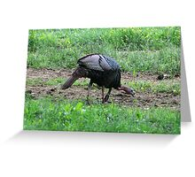 Eastern Wild Turkey Greeting Card