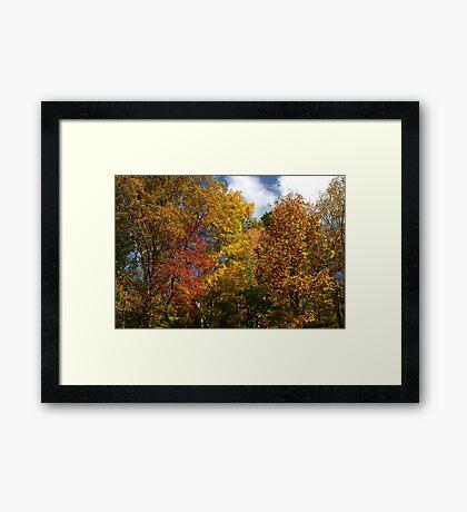 Autumns Splendor II Framed Print