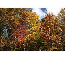 Autumns Splendor II Photographic Print