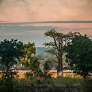 Liwonde Sunset by Tim Cowley