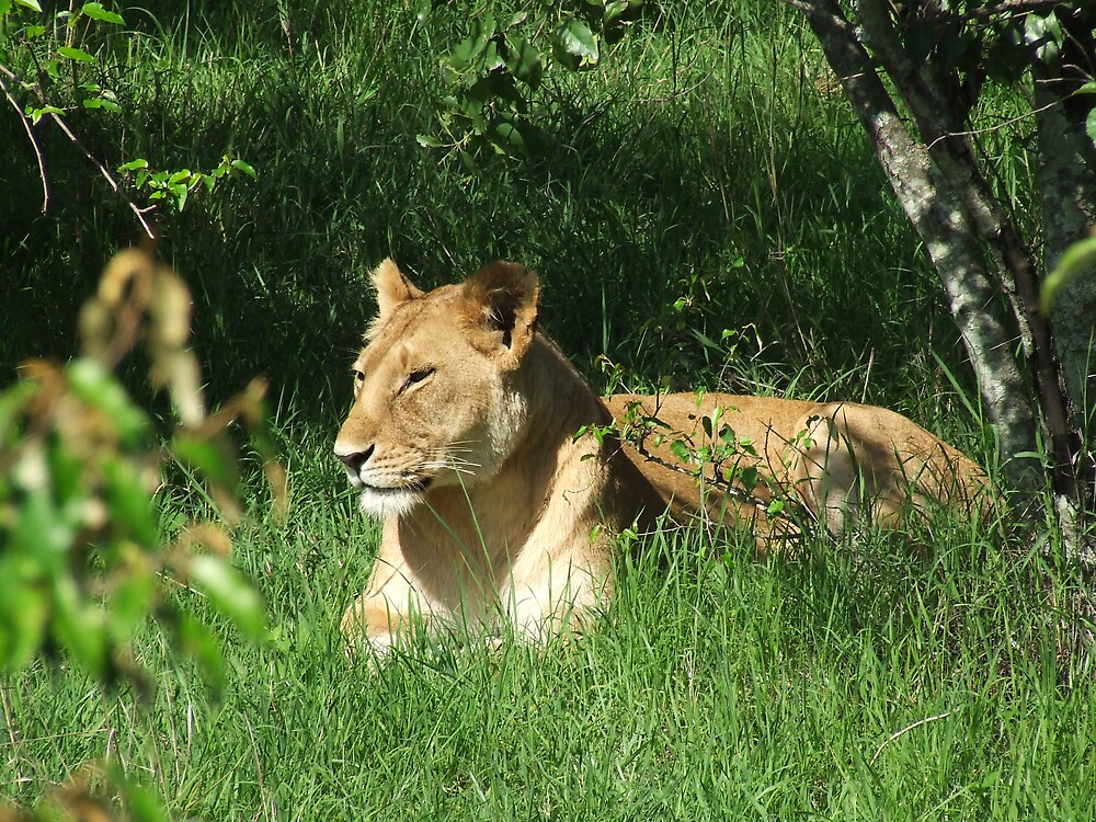 Masai Lioness by chesh722