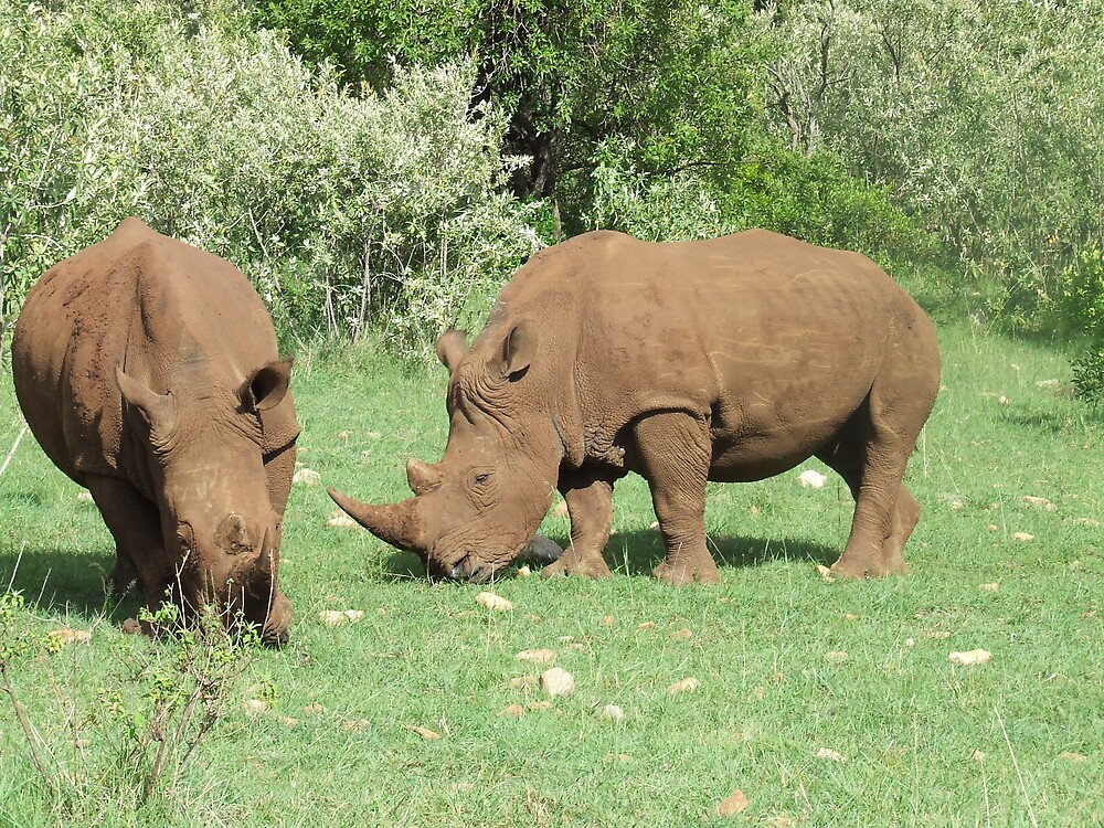 Walking Safari on Masaai by chesh722