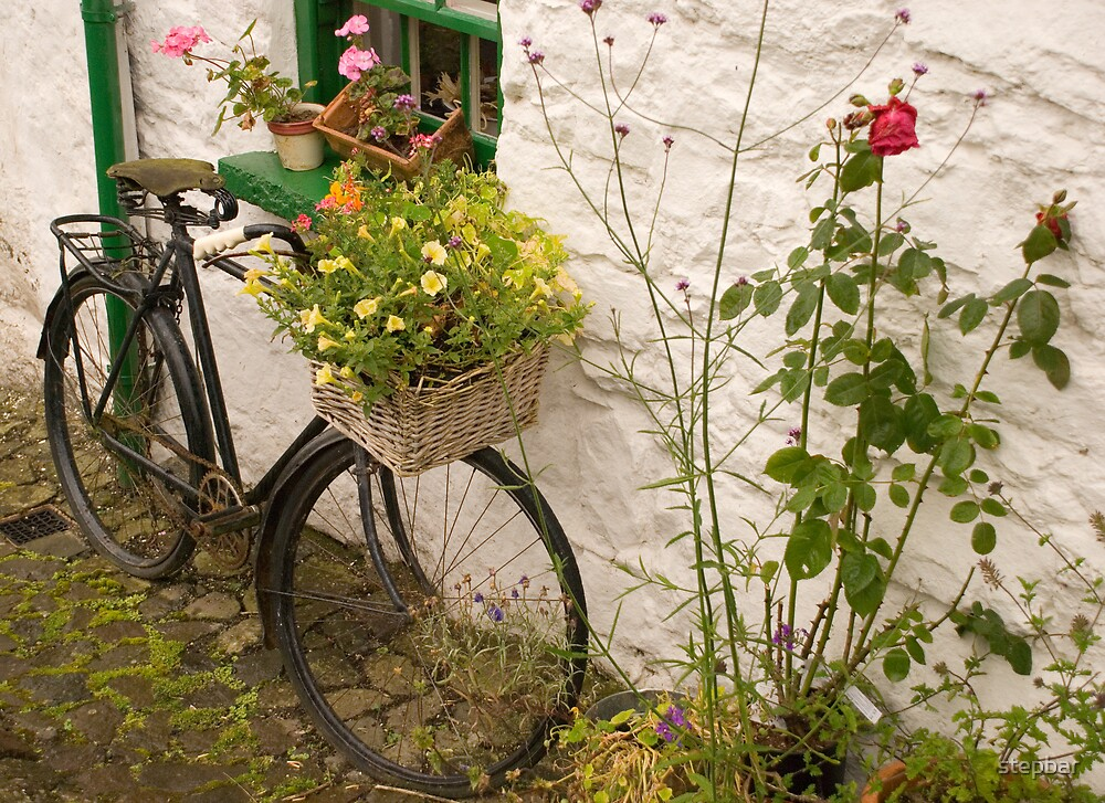 Floral Bicycle by stepbar