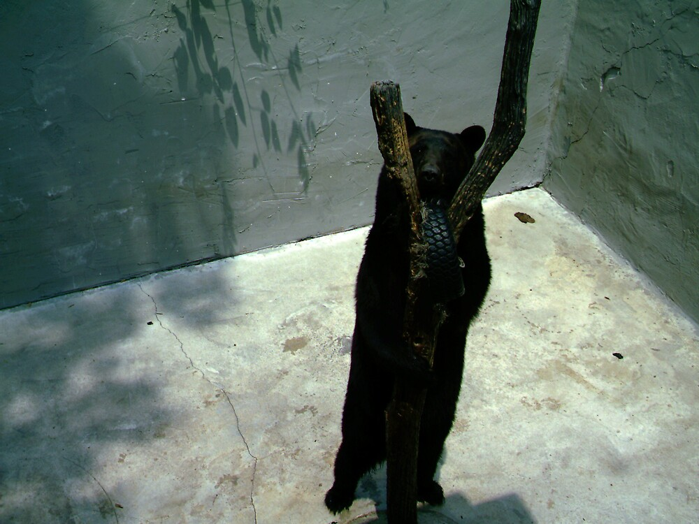 A bear Tree Dancing! by volcomgrl17