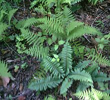 Ferns by volcomgrl17