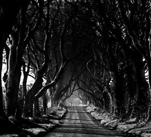 The Dark Hedges by Wrayzo
