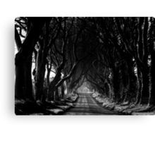 The Dark Hedges Canvas Print