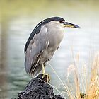 Heron in th Rain by Tracy Riddell