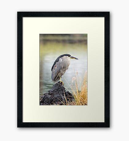 Heron in th Rain Framed Print