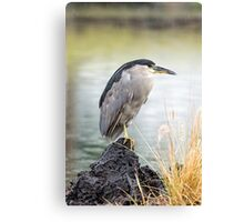Heron in th Rain Canvas Print