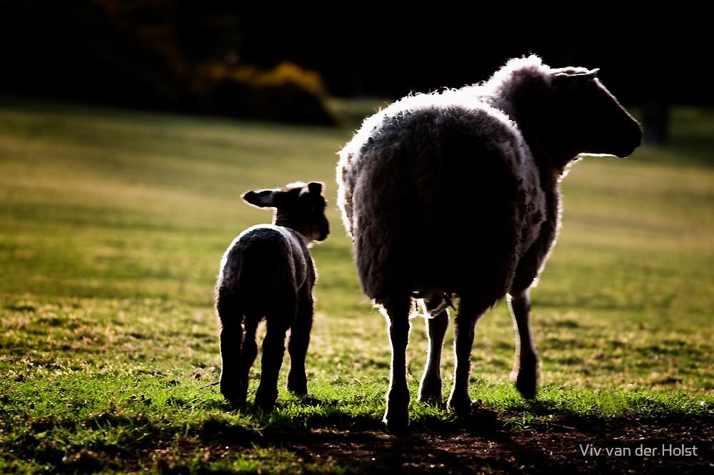 Sheep by Viv van der Holst