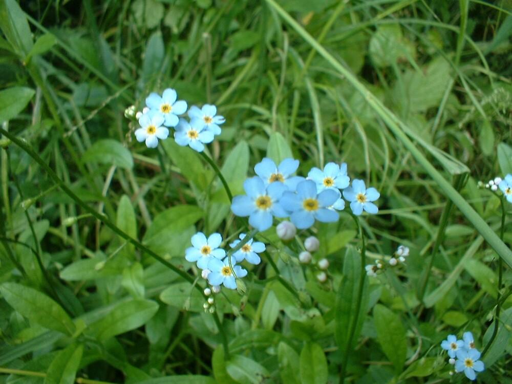 Blue Flowers Real Life by Joseph Klatka