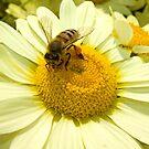 Honey Bee on Flower by Kawka