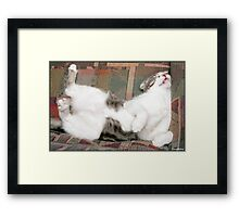 Billie the cat, playing dead. Framed Print