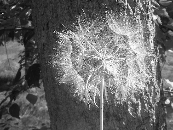 one big wish. by alina roberts