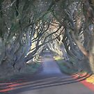 The Dark Hedges by peaky40