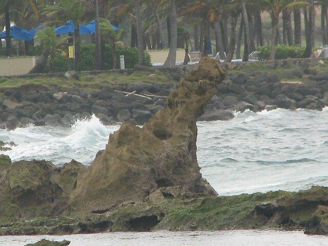 rock dog by kangoll