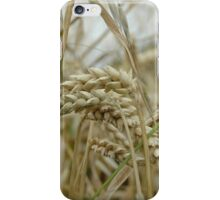 field of wheat iPhone Case/Skin