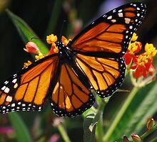 Butterfly by Michael D'Andrea Diaz