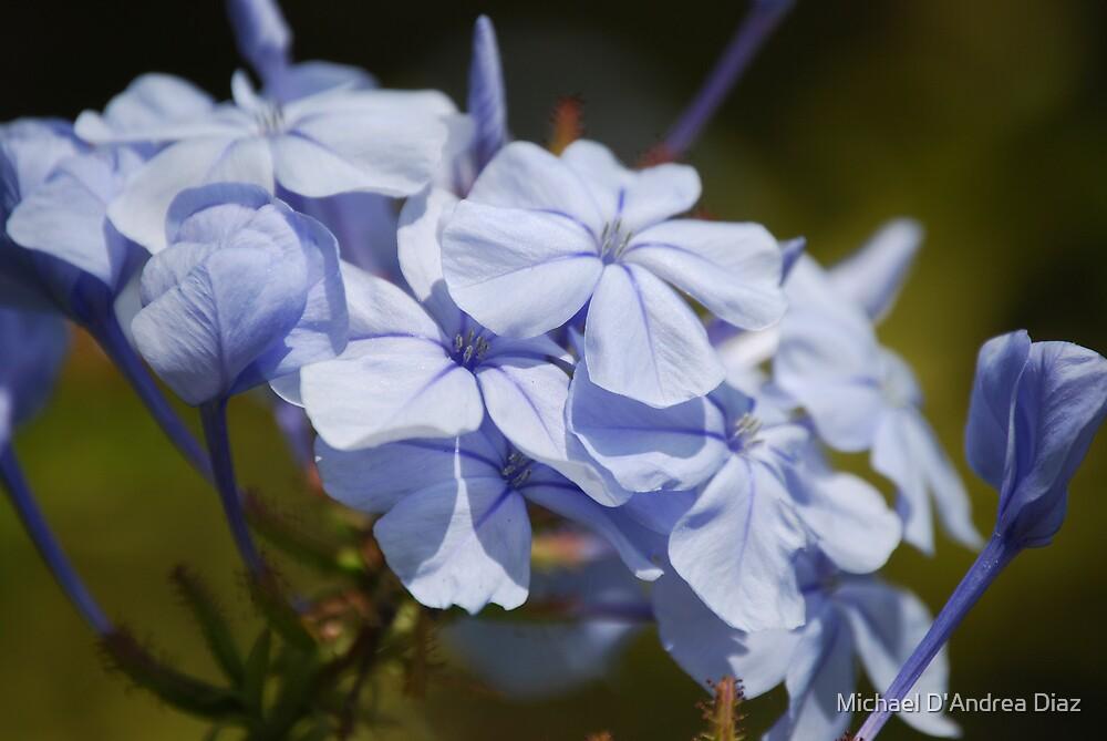 Blue Flowers by Michael D'Andrea Diaz