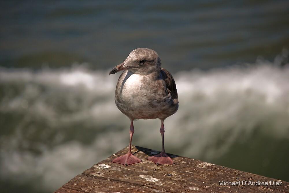 Beach Bird by Michael D'Andrea Diaz