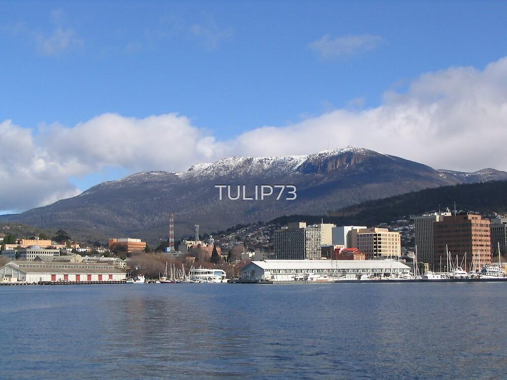 MT WELLINGTON by TULIP73