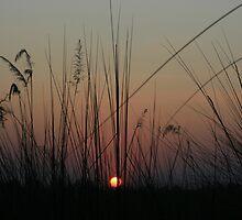 Reeds by K1dd3r5