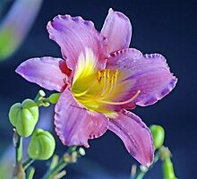 Front Yard Flower by raptrlvr
