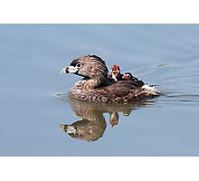 """Mom!...Timmy won't move over!"" Pied-billed grebes Photographic Print"