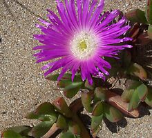 Beach flower by MeganJayne