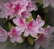 Overload in Pink by Carol Vega