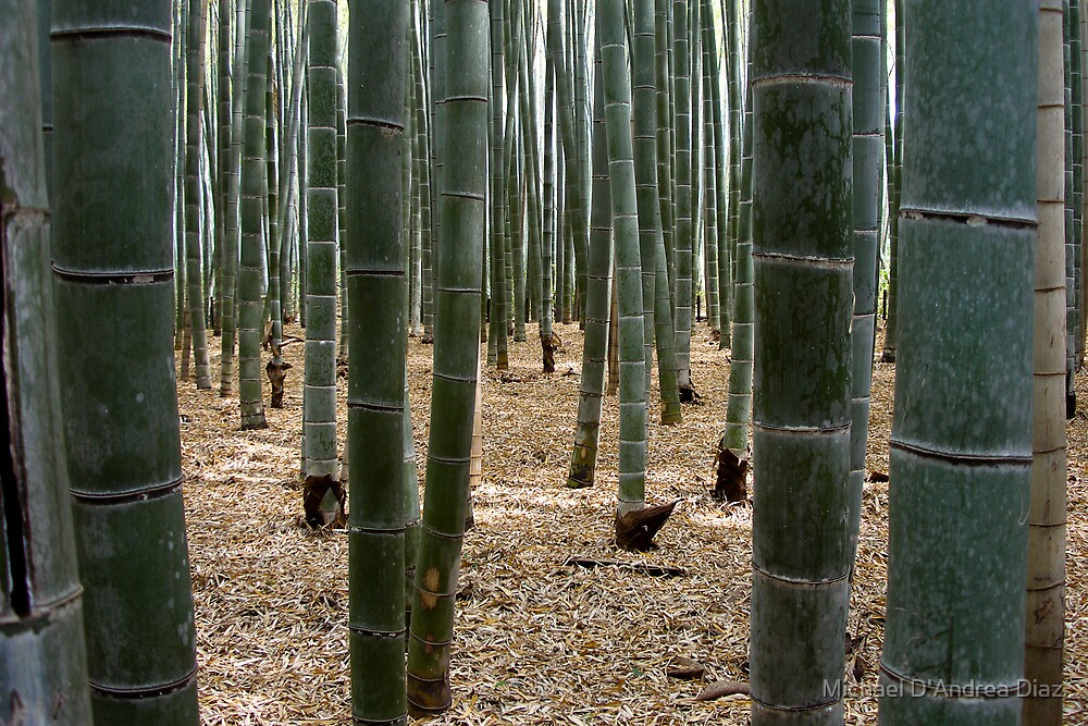 Bamboo by Michael D'Andrea Diaz
