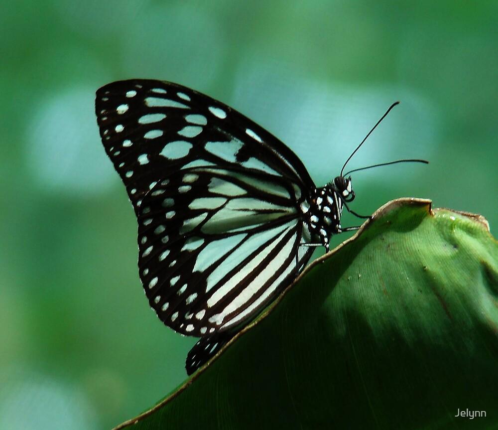 butterfly by Jelynn
