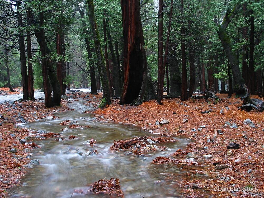 On the path to Yosemite Falls by Dan Blackstock