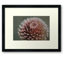 Fur Ball Framed Print