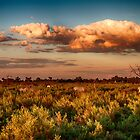 Under African Skies by Marylou Badeaux
