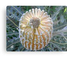 Banksia beauty Metal Print