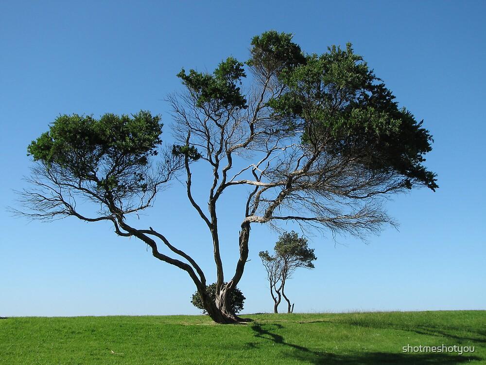 Lone Tree by shotmeshotyou